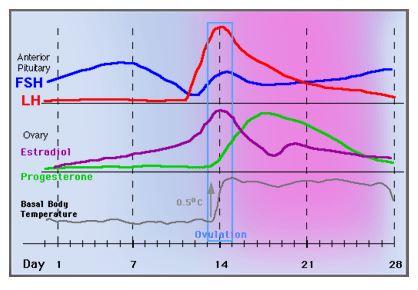 hormones-bbt-charting