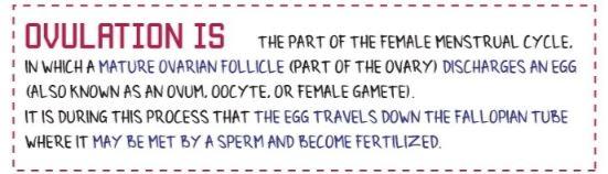 ovulation-is